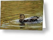 Duck Dip Greeting Card