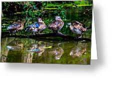 Duck Duck Duck Duck Greeting Card