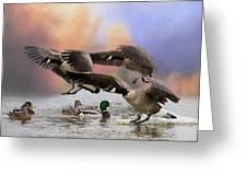 Duck Ducks 2 Greeting Card