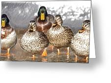 Duck - Id 16235-220402-2840 Greeting Card
