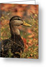 Duck In Autumn Greeting Card