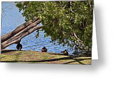 Duck Into The Shade Greeting Card