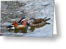 Duck Love Greeting Card