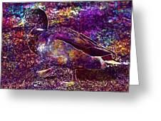 Duck Mallard Anatidae Duck Bird  Greeting Card