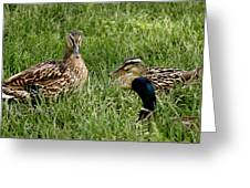 Duck Meeting At Frankenmuth Greeting Card