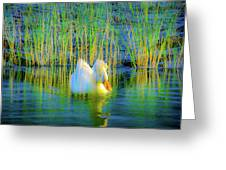 Duck On A Mission Greeting Card