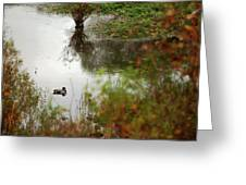 Duck On A Pond Greeting Card