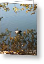Duck On Golden Pond Greeting Card