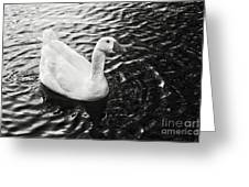 Duck On The Black Sea Greeting Card