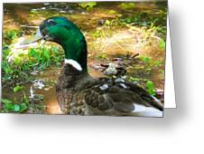 Duck On The Lake 1 Greeting Card