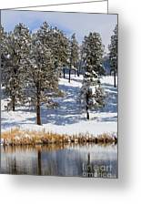 Duck Pond In Colorado Snow Greeting Card
