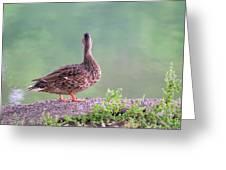 Duck Ponders Greeting Card