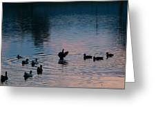 Duck Show Off Greeting Card