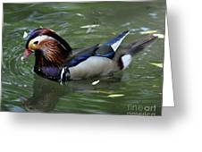 Duck Soup Greeting Card