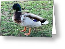 Duck - Standing Greeting Card