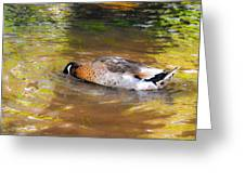 Duck Submerge It Head Into The Water Looking For Food In The River 2 Greeting Card
