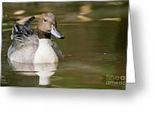 Duck Swimming, Front Portrait. Greeting Card