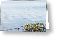 Duck Swimming In Lake Greeting Card