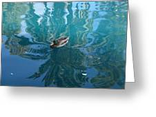 Duck Swimming In The Blue Lagoon Greeting Card