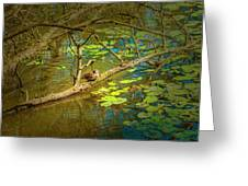 Duck Tales.  Greeting Card