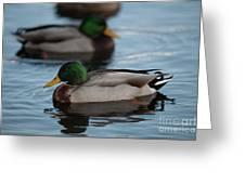 Duck Trio Greeting Card