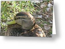 Duck Upclose Greeting Card