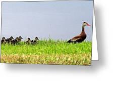 Duck Walk Greeting Card