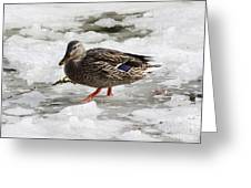 Duck Walking On Thin Ice Greeting Card
