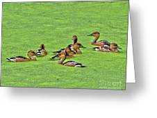 Duck Weed Club Greeting Card