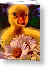 Fuzzy Duckling And Daisies Greeting Card