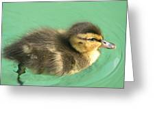 Duckling Close Up Greeting Card