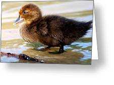 Duckling In Water Greeting Card
