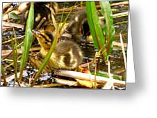 Ducklings 1 Greeting Card