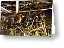 Ducklings 2 Greeting Card