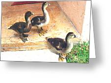 Ducklings Come To Visit Greeting Card