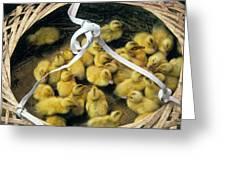 Ducklings In A Basket Greeting Card