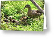 Ducklings Through The Ferns Greeting Card