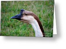Ducks And Geese 1 Greeting Card