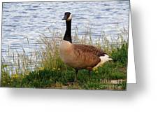 Ducks And Geese 2 Greeting Card