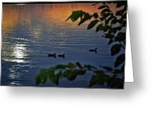 Ducks At Daybreak  Greeting Card