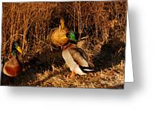 Ducks At Dusk Greeting Card