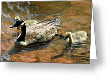 Duck Family Greeting Card