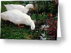Ducks In The Garden At The Shipwright's Cafe Greeting Card