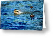 Ducks In Water Greeting Card