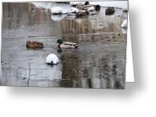 Ducks In Winter Greeting Card