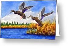 Ducks Landing In A Marsh Greeting Card