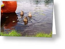 Ducks Mooning Greeting Card