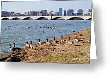 Ducks Of The Potomac Greeting Card
