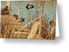 Ducks On A Pond Greeting Card