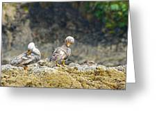 Ducks On A Rock Greeting Card
